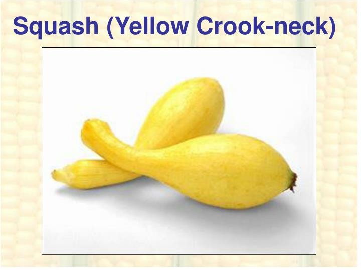 Squash (Yellow Crook-neck)