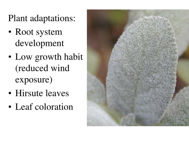 Plant adaptations: