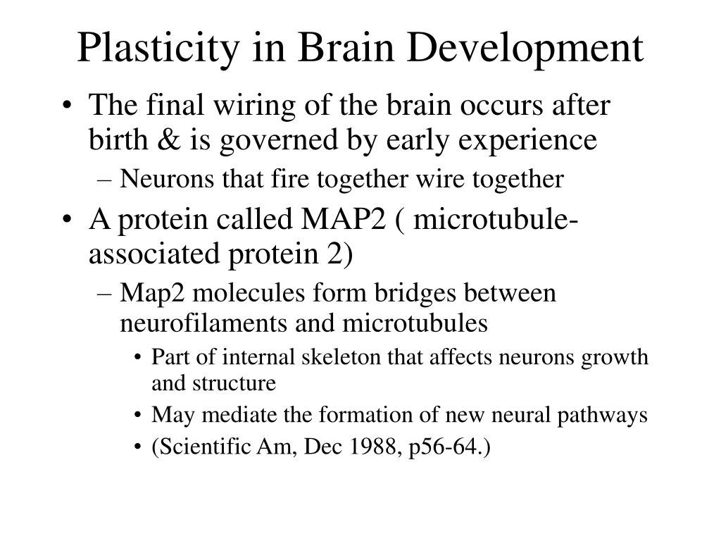 Plasticity in Brain Development