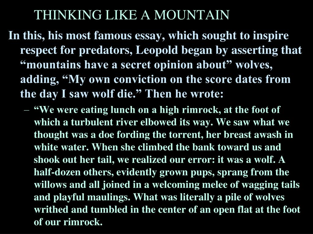 "In this, his most famous essay, which sought to inspire respect for predators, Leopold began by asserting that ""mountains have a secret opinion about"" wolves, adding, ""My own conviction on the score dates from the day I saw wolf die."" Then he wrote:"