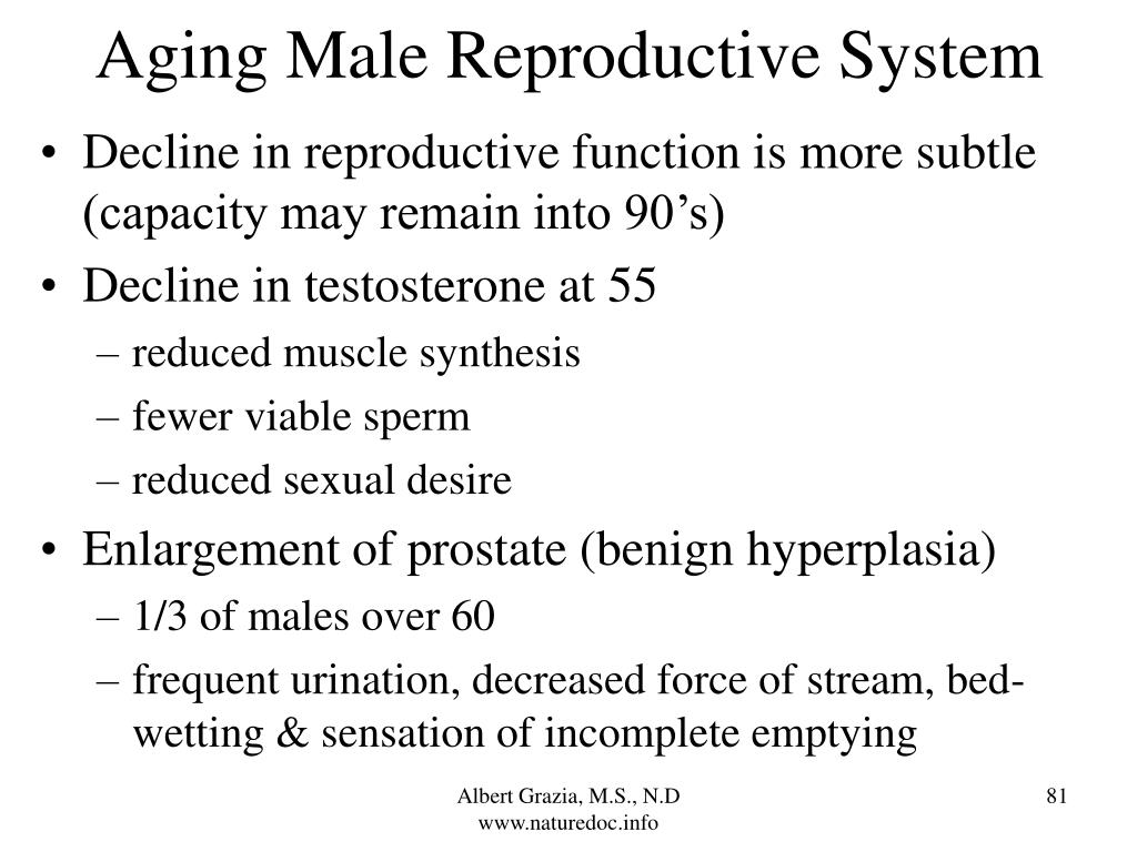 Aging Male Reproductive System