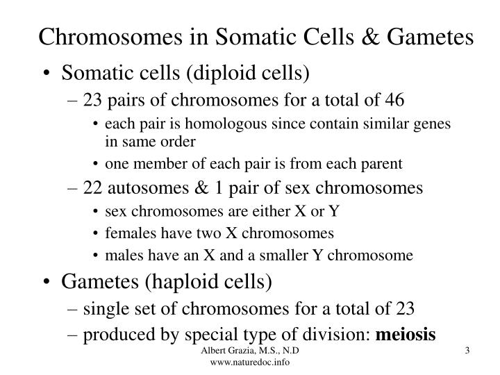 Chromosomes in somatic cells gametes