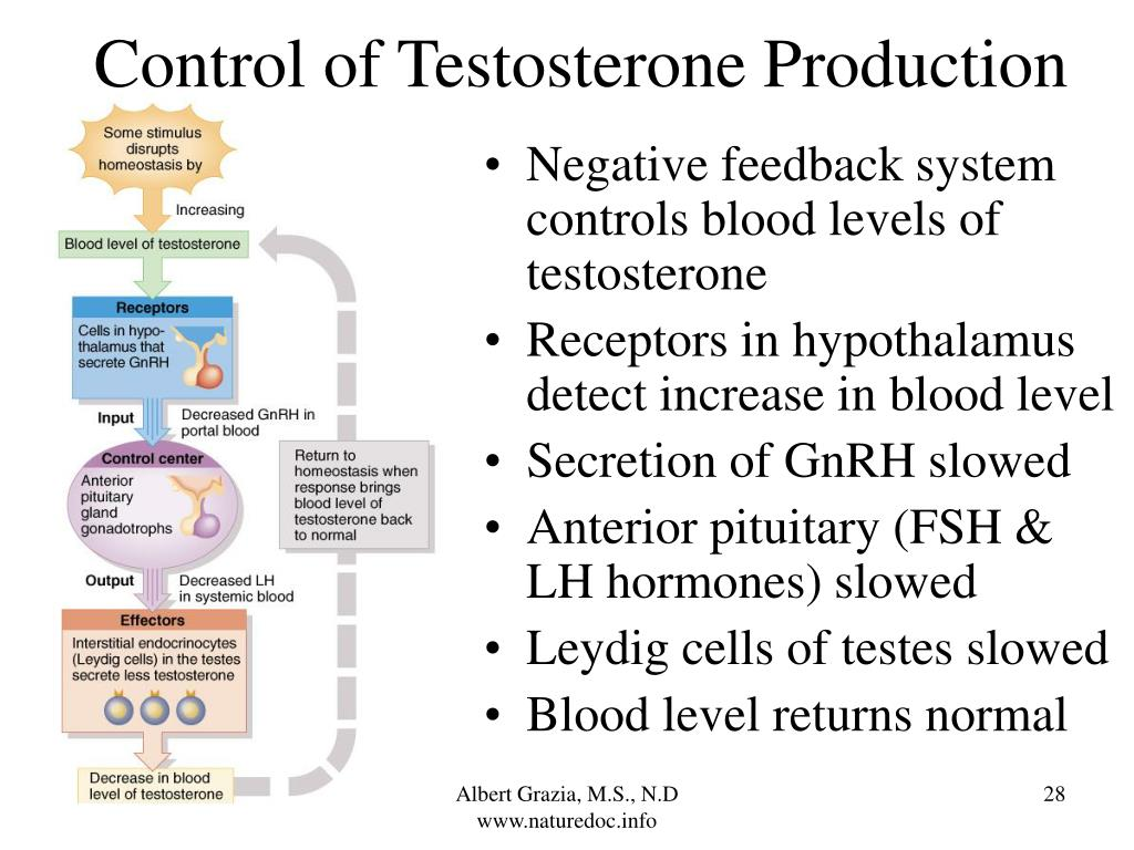 Control of Testosterone Production