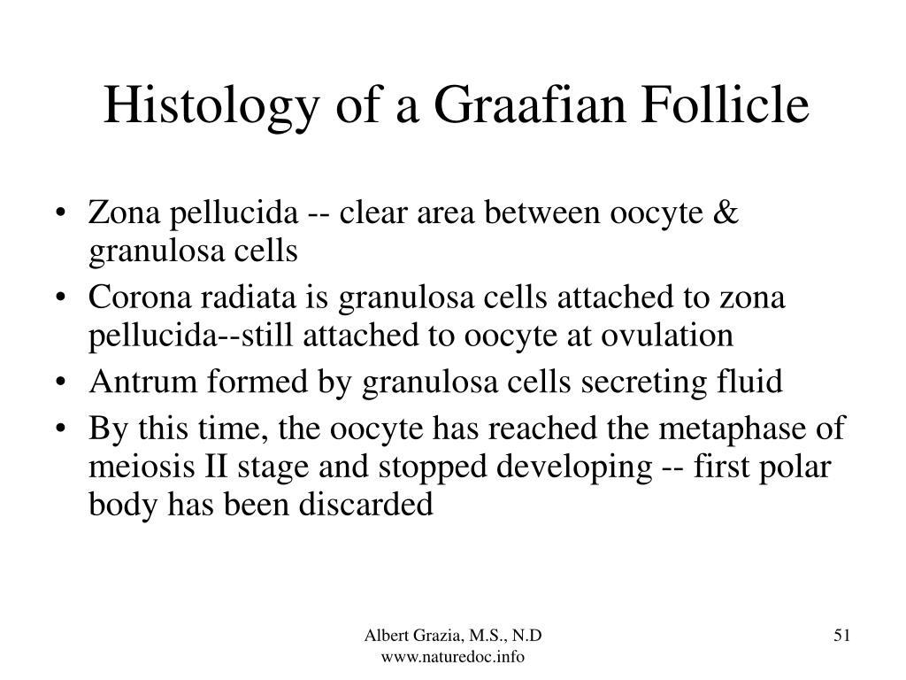 Histology of a Graafian Follicle