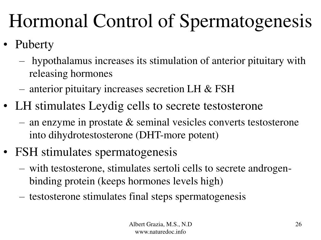 Hormonal Control of Spermatogenesis
