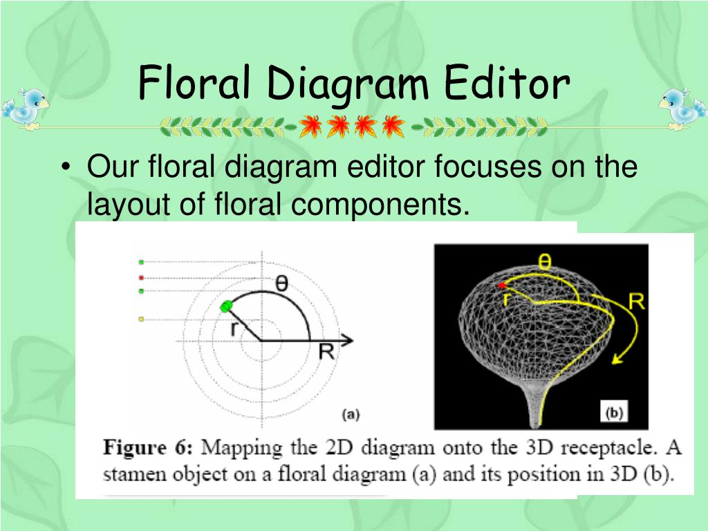 Floral Diagram Editor
