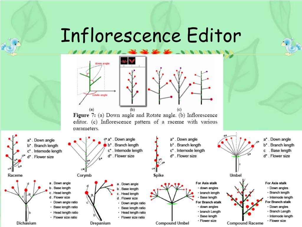 Inflorescence Editor