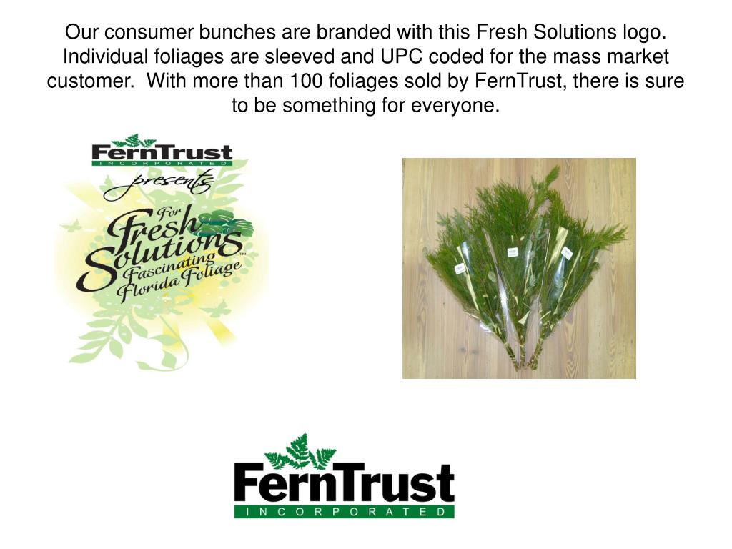 Our consumer bunches are branded with this Fresh Solutions logo.  Individual foliages are sleeved and UPC coded for the mass market customer.  With more than 100 foliages sold by FernTrust, there is sure to be something for everyone.