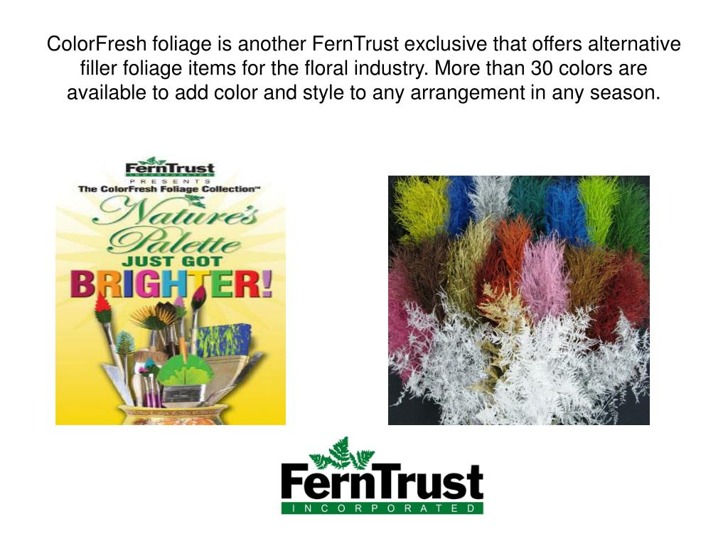 ColorFresh foliage is another FernTrust exclusive that offers alternative filler foliage items for the floral industry. More than 30 colors are available to add color and style to any arrangement in any season.