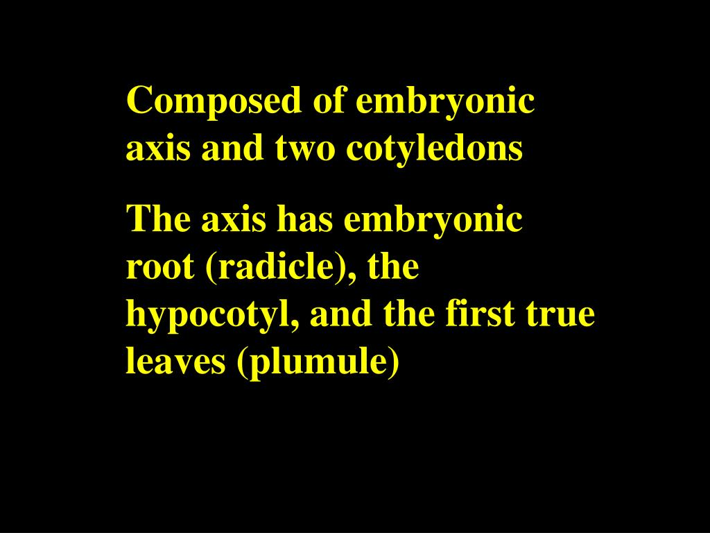 Composed of embryonic axis and two cotyledons