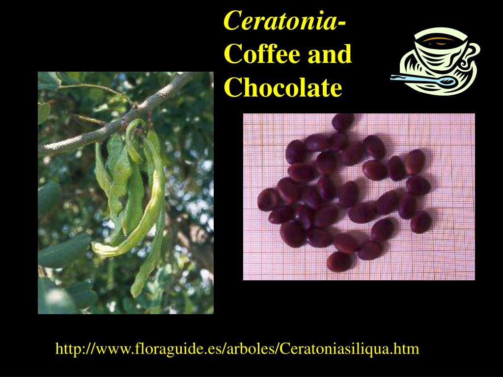 Ceratonia-