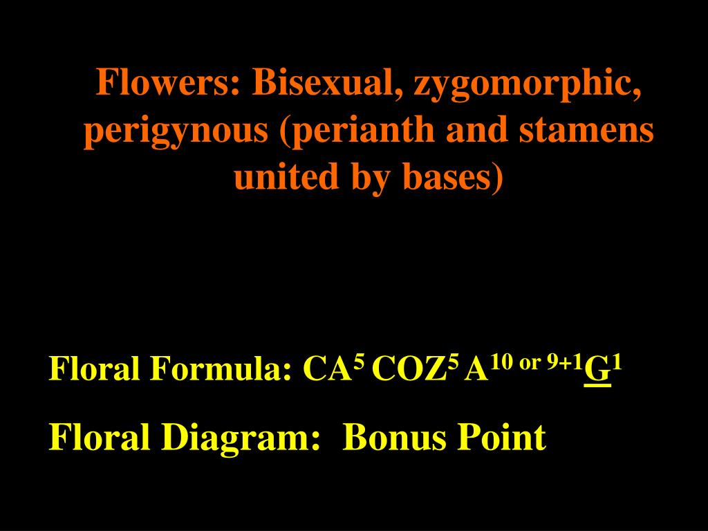 Flowers: Bisexual, zygomorphic, perigynous (perianth and stamens united by bases)