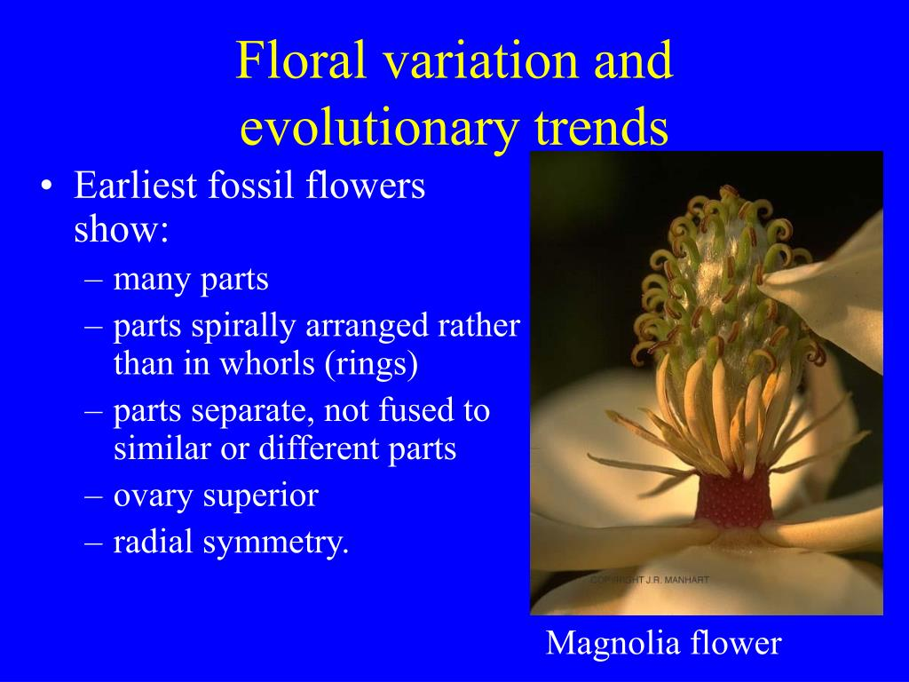 Floral variation and