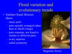 floral variation and evolutionary trends