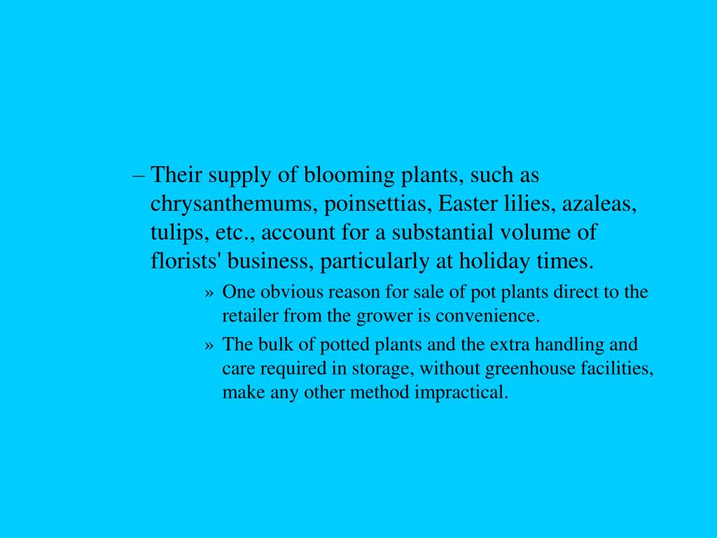 Their supply of blooming plants, such as chrysanthemums, poinsettias, Easter lilies, azaleas, tulips, etc., account for a substantial volume of florists' business, particularly at holiday times.