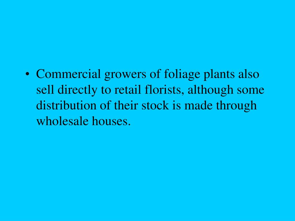 Commercial growers of foliage plants also sell directly to retail florists, although some distribution of their stock is made through wholesale houses.