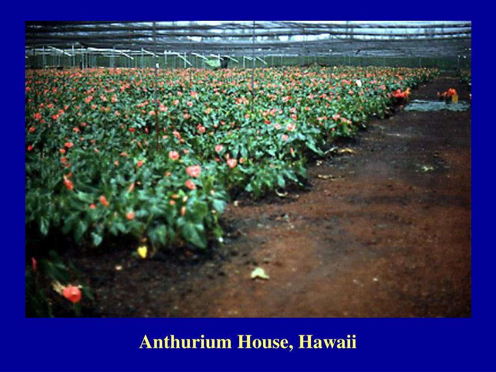 Anthurium House, Hawaii
