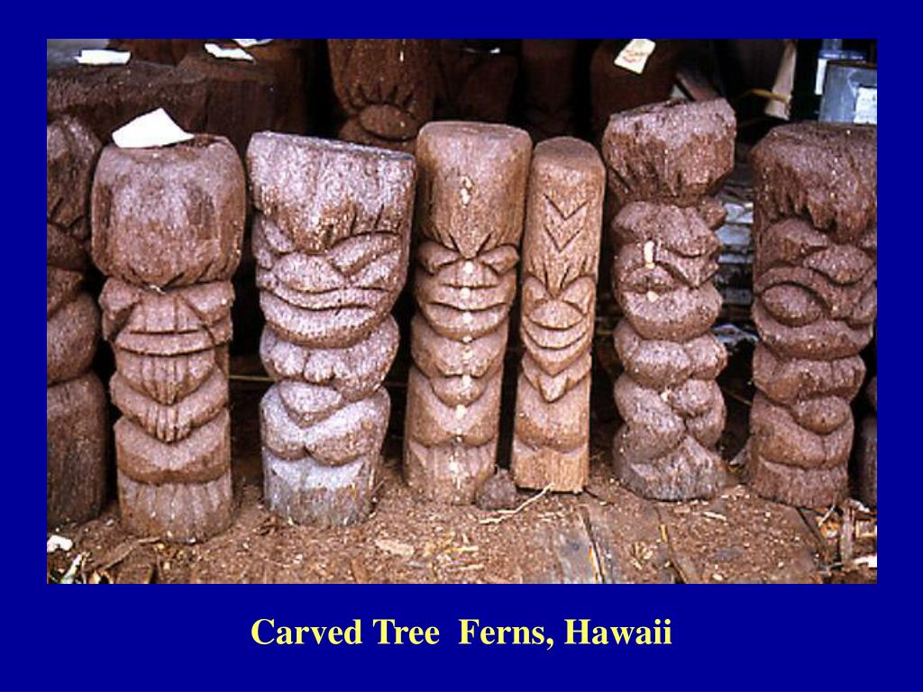Carved Tree  Ferns, Hawaii