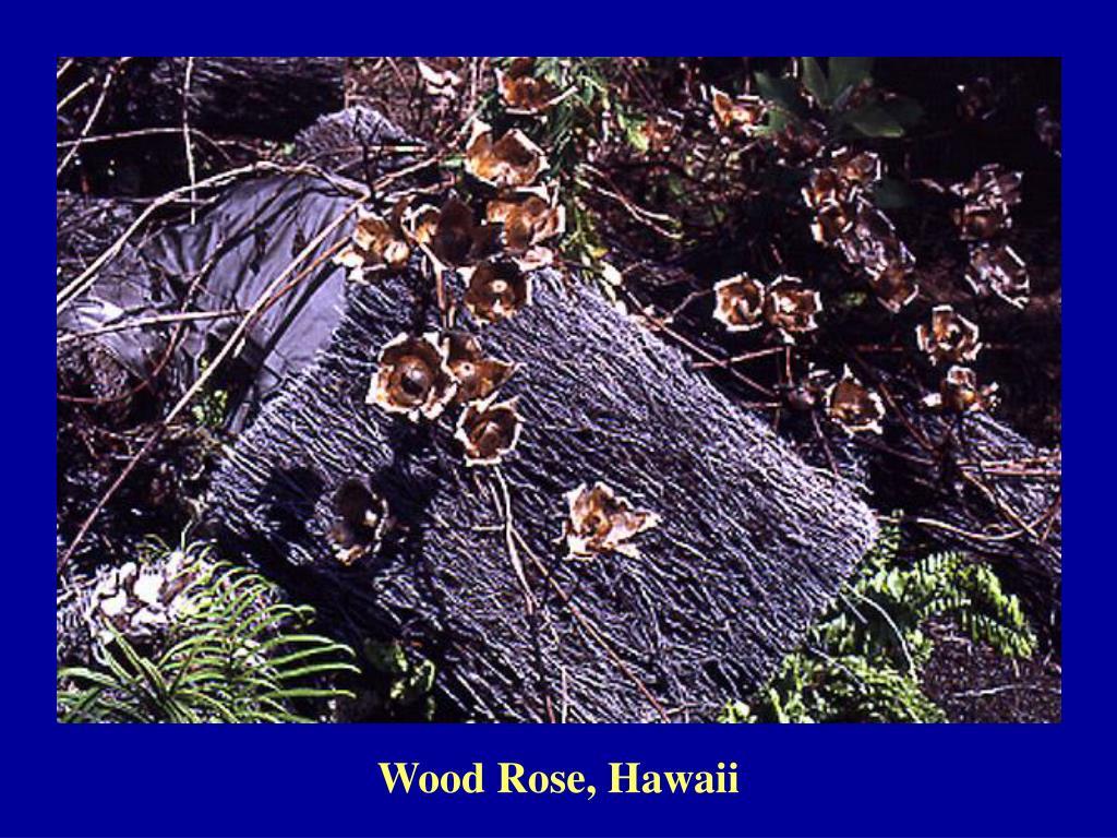 Wood Rose, Hawaii