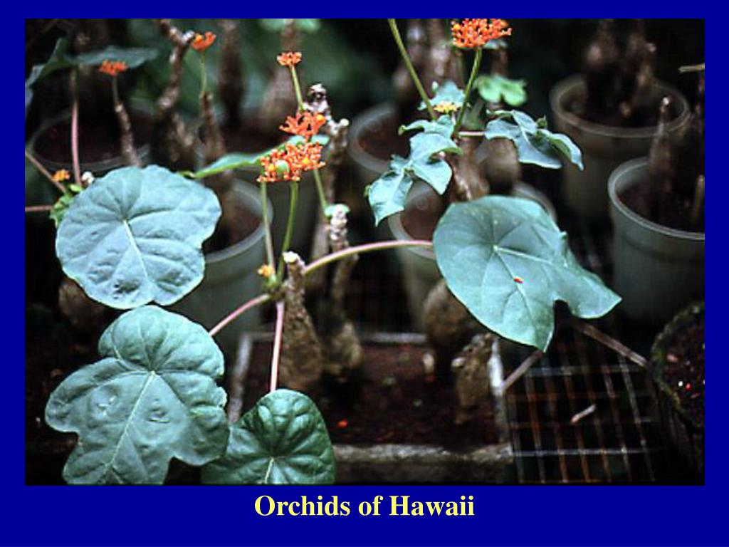 Orchids of Hawaii