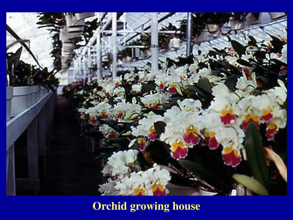Orchid growing house