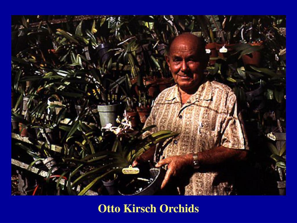 Otto Kirsch Orchids