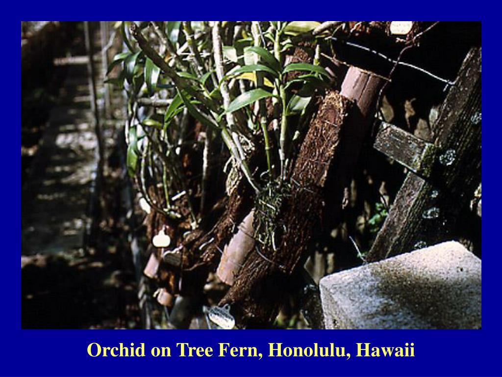 Orchid on Tree Fern, Honolulu, Hawaii