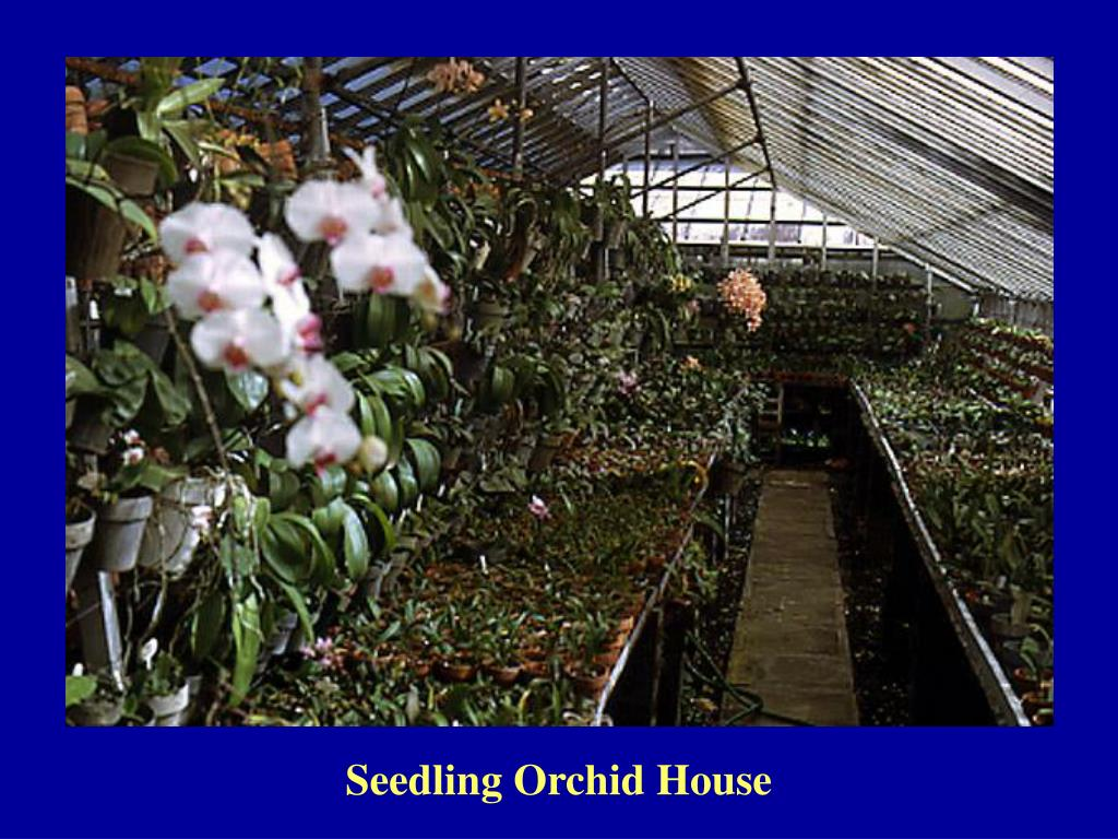 Seedling Orchid House