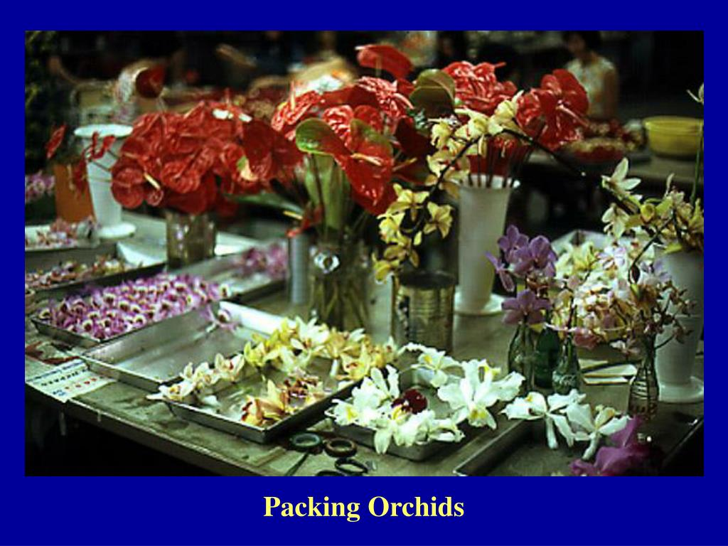 Packing Orchids