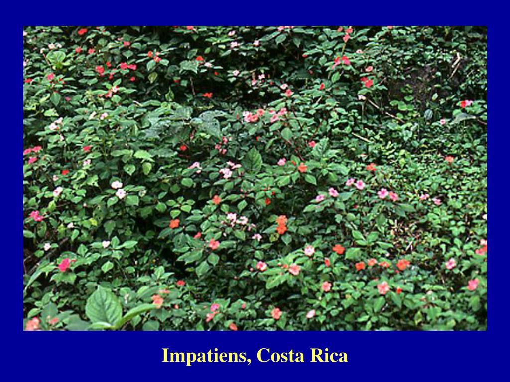 Impatiens, Costa Rica