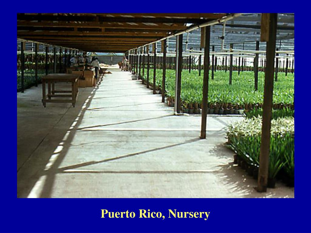 Puerto Rico, Nursery
