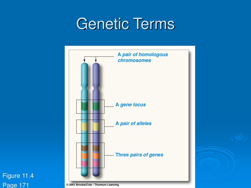 Genetic Terms