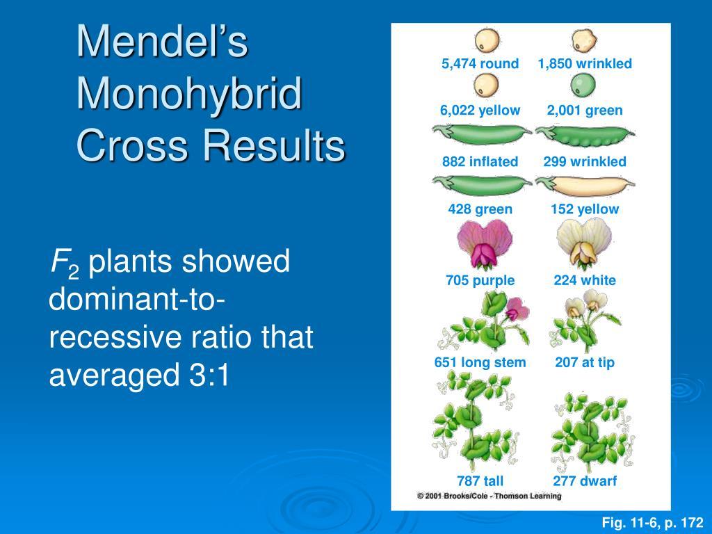Mendel's