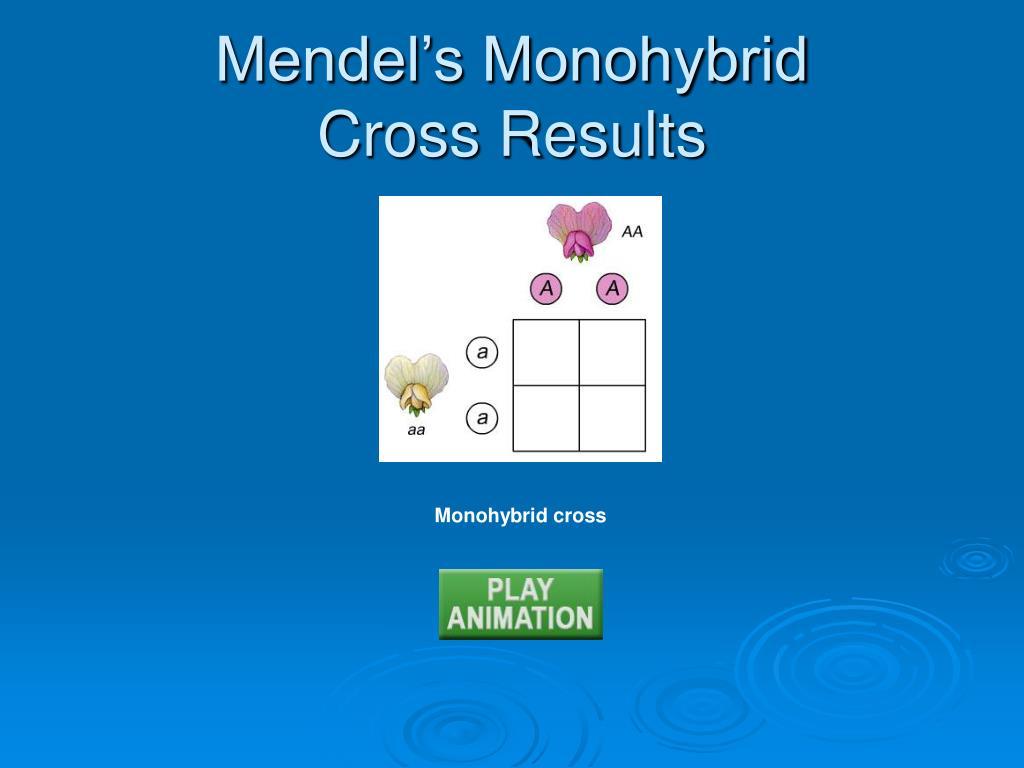 Mendel's Monohybrid