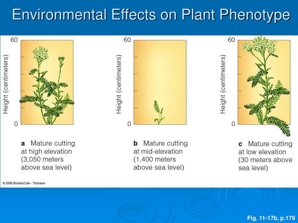 Environmental Effects on Plant Phenotype