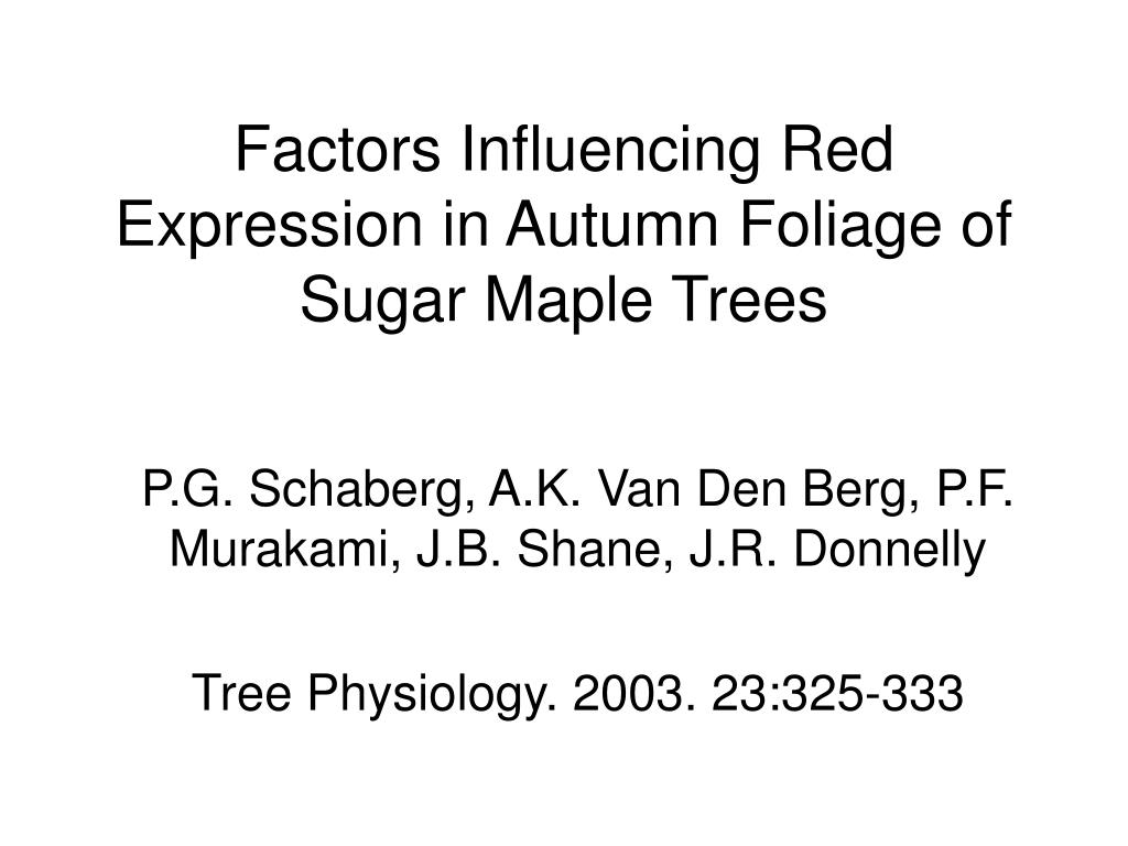 Factors Influencing Red Expression in Autumn Foliage of Sugar Maple Trees