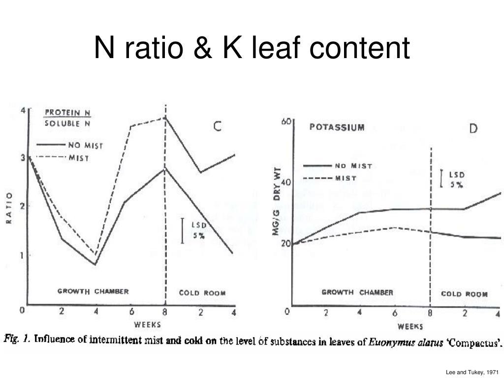 N ratio & K leaf content