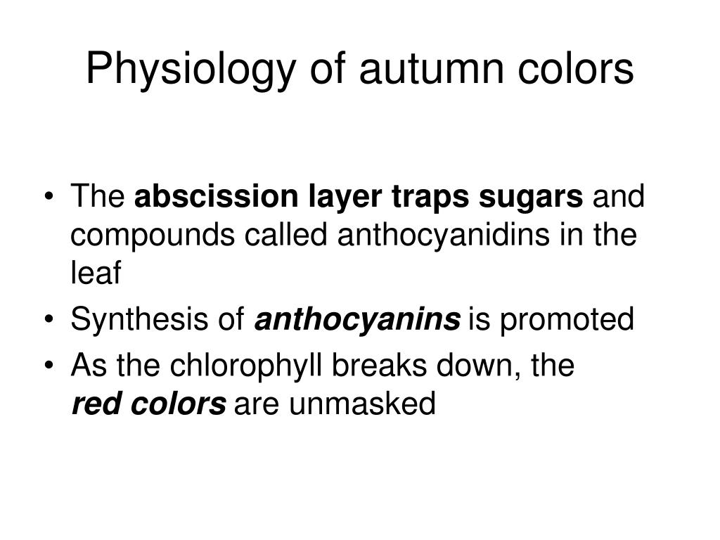 Physiology of autumn colors
