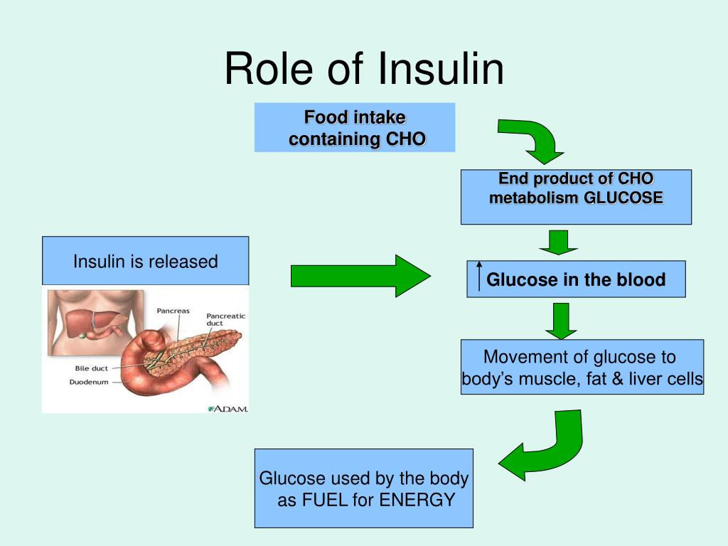 Role of Insulin