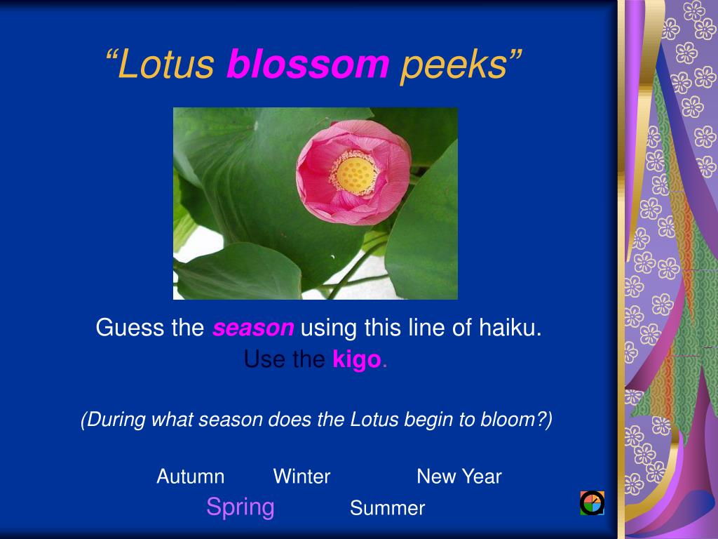 """""""Lotus"""