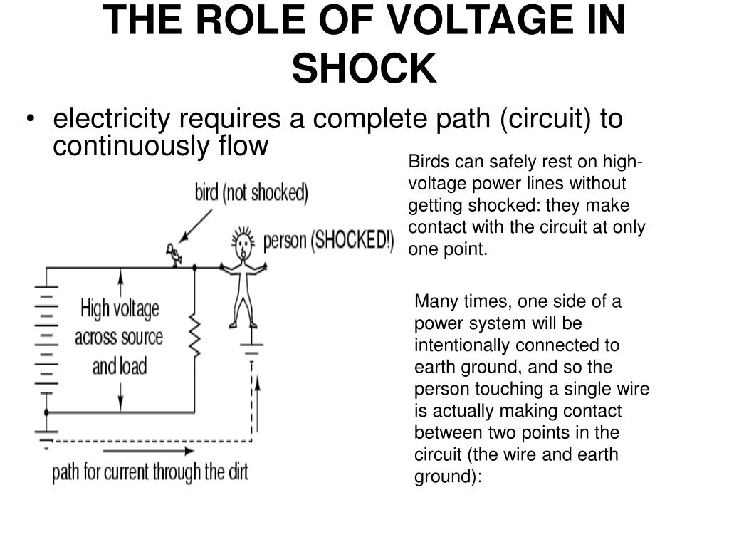 THE ROLE OF VOLTAGE IN SHOCK