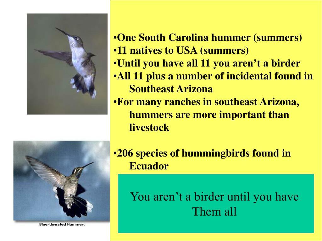 One South Carolina hummer (summers)