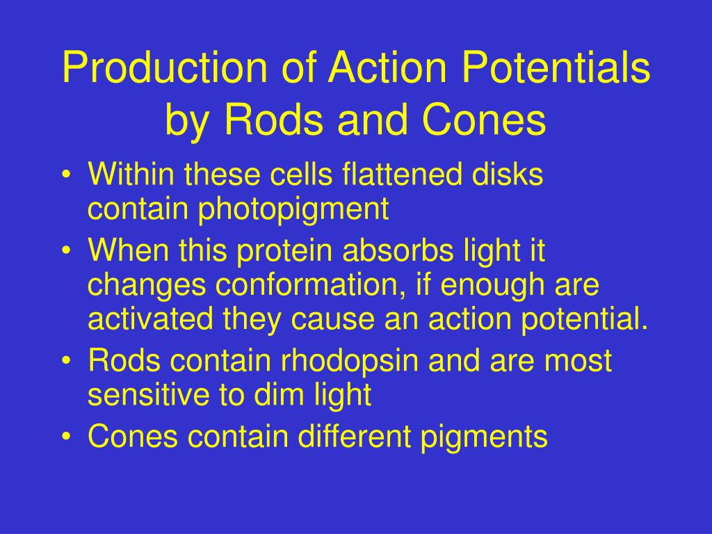 Production of Action Potentials by Rods and Cones