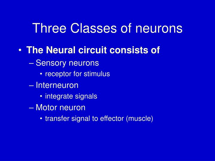 Three classes of neurons
