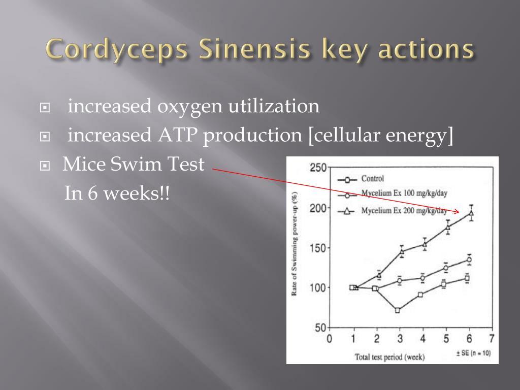 Cordyceps Sinensis key actions