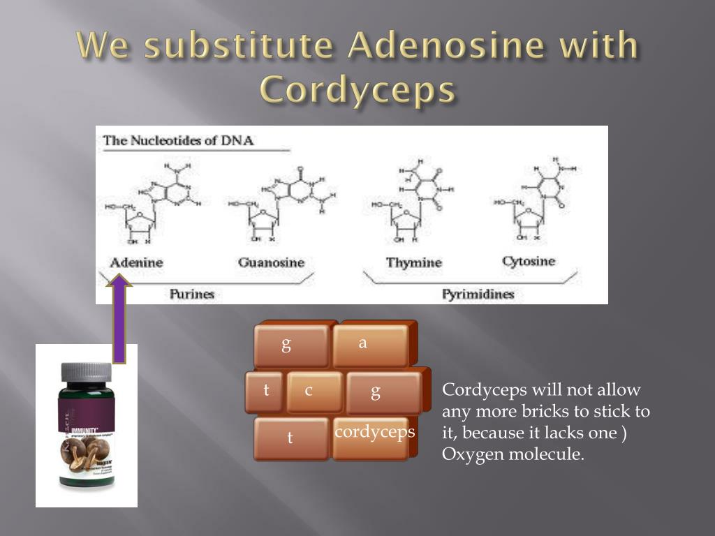 We substitute Adenosine with Cordyceps