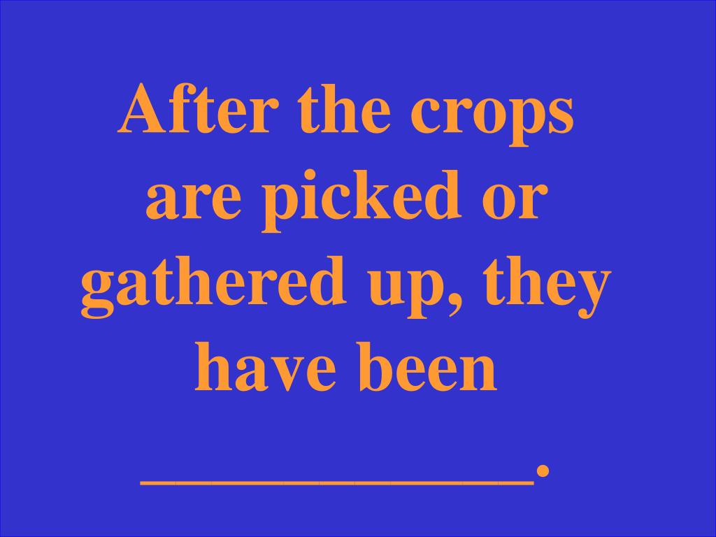 After the crops are picked or gathered up, they have been ___________.
