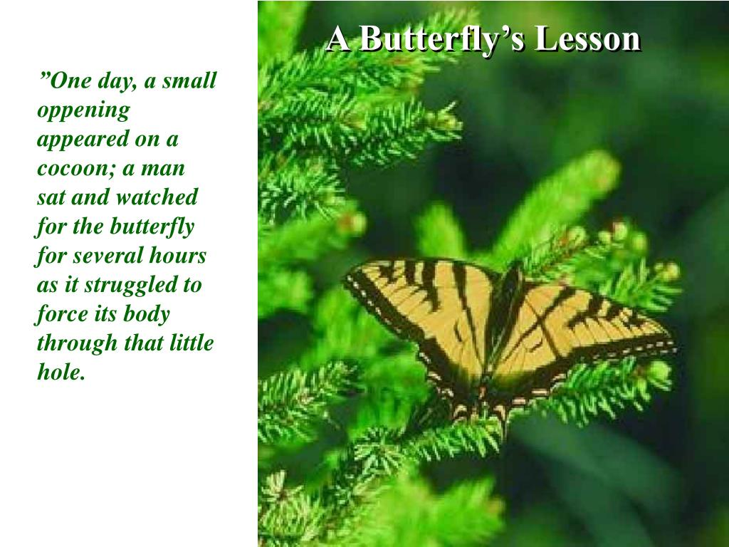 A Butterfly's Lesson