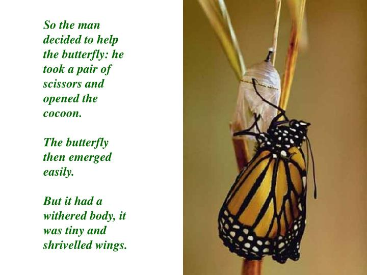 So the man decided to help the butterfly: he took a pair of scissors and opened the cocoon.