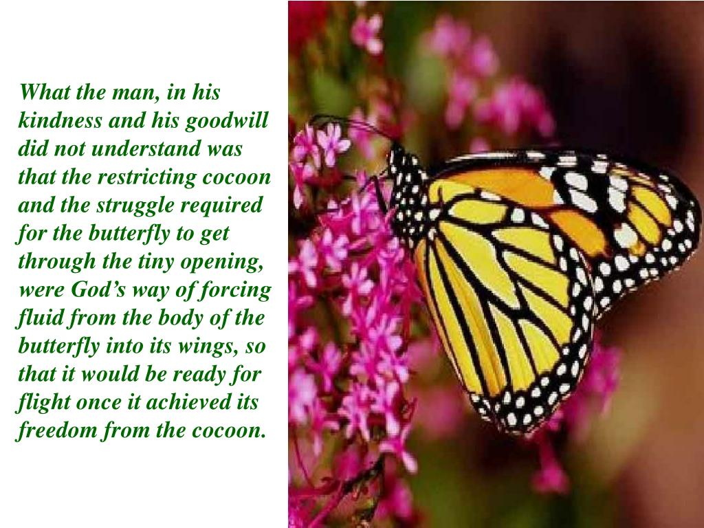 What the man, in his kindness and his goodwill did not understand was that the restricting cocoon and the struggle required for the butterfly to get through the tiny opening, were God's way of forcing fluid from the body of the butterfly into its wings, so that it would be ready for flight once it achieved its freedom from the cocoon.